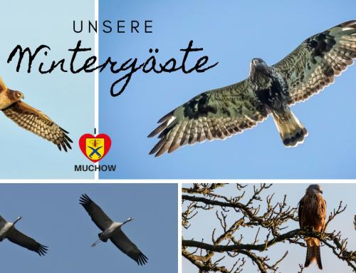 Unsere Wintergäste – Großvögel zu Hause in Muchow