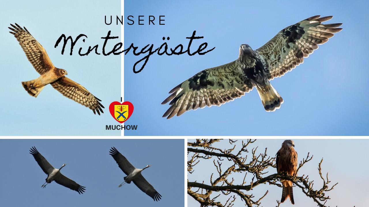 Unsere Wintergäste - Muchow, Dorf der Größvögel Report 2019